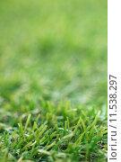 Купить «Artificial Grass», фото № 11538297, снято 16 сентября 2019 г. (c) PantherMedia / Фотобанк Лори