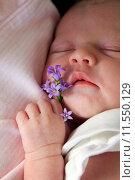 Купить «Спящая новорожденная девочка», фото № 11550129, снято 11 октября 2013 г. (c) Морозова Татьяна / Фотобанк Лори