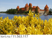 Желтые цветы на фоне замка в Тракае. Стоковое фото, фотограф Natalia Goleneva / Фотобанк Лори