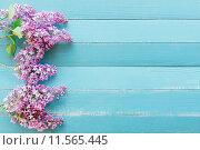 Купить «Сирень на столе», фото № 11565445, снято 23 января 2020 г. (c) Захар Гончаров / Фотобанк Лори