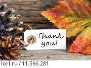 Купить «Fall Background with Thank You», фото № 11596281, снято 22 марта 2019 г. (c) PantherMedia / Фотобанк Лори