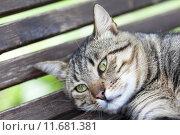 Купить «green-Eyed cat», фото № 11681381, снято 16 августа 2018 г. (c) PantherMedia / Фотобанк Лори