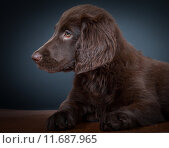 Купить «animal baby dog puppy cub», фото № 11687965, снято 17 февраля 2020 г. (c) PantherMedia / Фотобанк Лори