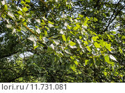 Купить «Yellow lichens and green leaves», фото № 11731081, снято 19 октября 2018 г. (c) PantherMedia / Фотобанк Лори