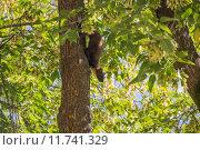 Лесная куница на стволе дерева среди зеленых листьев. Стоковое фото, фотограф Михаил Степанов / Фотобанк Лори