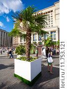 Пальма на фестивале варенья. Редакционное фото, фотограф Роман Басманов / Фотобанк Лори