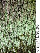 Купить «Close up of the tree bark with green moss», фото № 11793205, снято 15 ноября 2018 г. (c) PantherMedia / Фотобанк Лори