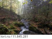 Купить «nature forest autumn fall fog», фото № 11845281, снято 22 июля 2019 г. (c) PantherMedia / Фотобанк Лори