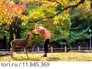 Купить «Visitors feed wild deer in Nara», фото № 11845369, снято 22 октября 2018 г. (c) PantherMedia / Фотобанк Лори
