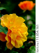 Купить «nature close up plant flower», фото № 11854161, снято 20 сентября 2018 г. (c) PantherMedia / Фотобанк Лори