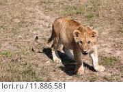 Купить «nature green animal holiday sport», фото № 11886581, снято 21 марта 2019 г. (c) PantherMedia / Фотобанк Лори