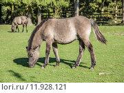 Купить «horse horses lmener wildpferde gregarious», фото № 11928121, снято 26 марта 2019 г. (c) PantherMedia / Фотобанк Лори