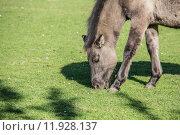 Купить «horse horses lmener wildpferde gregarious», фото № 11928137, снято 26 марта 2019 г. (c) PantherMedia / Фотобанк Лори