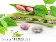 Купить «Ripe Haricot Beans with Seed and Leaves Isolated on White», фото № 11928593, снято 23 февраля 2019 г. (c) PantherMedia / Фотобанк Лори