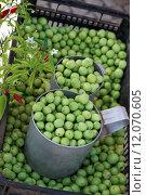 Купить «portugal chili chilli olives algarve», фото № 12070605, снято 19 июня 2019 г. (c) PantherMedia / Фотобанк Лори