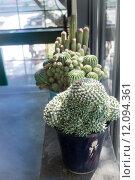 Cactus pot in the sun by the window. Стоковое фото, фотограф Nalinratana Phiyanalinmat / PantherMedia / Фотобанк Лори