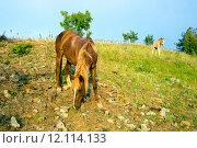 Купить «Лошадь с жеребенком пасутся на склоне», фото № 12114133, снято 27 мая 2015 г. (c) Алексей Маринченко / Фотобанк Лори