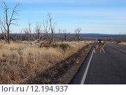 Купить «Buck Deer walks across road», фото № 12194937, снято 17 июня 2019 г. (c) PantherMedia / Фотобанк Лори