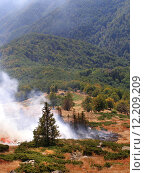Купить «Disastrous consequences of forest fires», фото № 12209209, снято 20 марта 2019 г. (c) PantherMedia / Фотобанк Лори