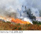 Купить «Coniferous forest in fire», фото № 12209221, снято 18 июля 2018 г. (c) PantherMedia / Фотобанк Лори