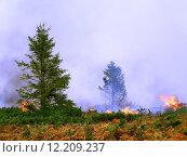Купить «Coniferous forest in fire», фото № 12209237, снято 20 марта 2019 г. (c) PantherMedia / Фотобанк Лори