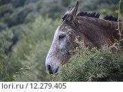 Купить «green sky grass mammal meadow», фото № 12279405, снято 25 апреля 2019 г. (c) PantherMedia / Фотобанк Лори