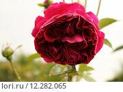 Купить «plant flower garden weather drop», фото № 12282065, снято 17 января 2019 г. (c) PantherMedia / Фотобанк Лори