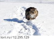 Купить «sport spring winter snow sports», фото № 12295129, снято 6 января 2019 г. (c) PantherMedia / Фотобанк Лори