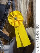 Купить «detail horse riding award distinction», фото № 12408193, снято 20 марта 2019 г. (c) PantherMedia / Фотобанк Лори