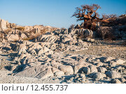 Boabab on Granite Rocks. Стоковое фото, фотограф Jacques Jacobsz / PantherMedia / Фотобанк Лори