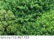 Купить «Big tree fromm top view», фото № 12467153, снято 15 ноября 2019 г. (c) PantherMedia / Фотобанк Лори