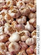 Купить «garlic allium sativum gem semarkt», фото № 12485637, снято 24 июня 2019 г. (c) PantherMedia / Фотобанк Лори