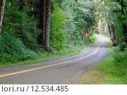 Купить «Two Lane Road Cuts Through Dense Tree Canopy Hoh Rainforest», фото № 12534485, снято 14 июля 2020 г. (c) PantherMedia / Фотобанк Лори