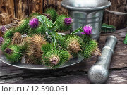 Купить «Bright prickly Thistle buds collected for medicinal purposes in the iron bowl with mortar and pestle.Photo tinted.», фото № 12590061, снято 23 мая 2018 г. (c) PantherMedia / Фотобанк Лори