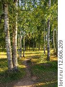 Тропинка в берёзовой роще летним солнечным днём в конце августа. Стоковое фото, фотограф Максим Мицун / Фотобанк Лори