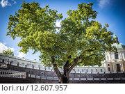 Дерево (2015 год). Стоковое фото, фотограф Алёна / Фотобанк Лори
