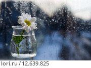 Прекрасный белый цветок стоит на окне в стеклянной вазочке. Стоковое фото, фотограф Земсков Андрей  Владимирович / Фотобанк Лори