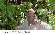 Купить «Мужчина срезает спелые грозди винограда и кладет их в корзину», видеоролик № 12653349, снято 5 сентября 2015 г. (c) Земсков Андрей  Владимирович / Фотобанк Лори