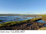 Тундра летом за полярным кругом, под Воркутой. Стоковое фото, фотограф Александр Брезденюк / Фотобанк Лори
