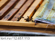Пчелы на рамках. Стоковое фото, фотограф Анатолий Матвейчук / Фотобанк Лори