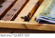 Работают пчелы. Стоковое фото, фотограф Анатолий Матвейчук / Фотобанк Лори