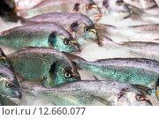 Купить «gilt-head bream fish on mediterranean market counter», фото № 12660077, снято 19 октября 2018 г. (c) Яков Филимонов / Фотобанк Лори