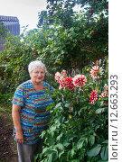 Купить «Довольная улыбающаяся женщина стоит у клумбы с георгинами, которые она вырастила сама», эксклюзивное фото № 12663293, снято 16 августа 2015 г. (c) Наталья Федорова / Фотобанк Лори