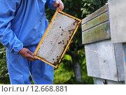 Рамка с медом по диагонали. Стоковое фото, фотограф Анатолий Матвейчук / Фотобанк Лори