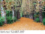 Осень в парке. Платановая аллея. Стоковое фото, фотограф Анатолий Платонов / Фотобанк Лори