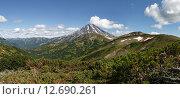 Купить «Панорама: летний вид на вулкан Вилючинский на Камчатке», фото № 12690261, снято 8 сентября 2015 г. (c) А. А. Пирагис / Фотобанк Лори