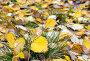 Осенняя листва с каплями дождя, фото № 12694765, снято 13 сентября 2015 г. (c) Алексей Маринченко / Фотобанк Лори