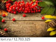 Купить «Рамка из рябины, шишек и осених листьев на деревянном столе», фото № 12703325, снято 10 сентября 2015 г. (c) Валерий Бочкарев / Фотобанк Лори