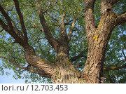 Купить «Ракита», эксклюзивное фото № 12703453, снято 27 августа 2015 г. (c) Елена Коромыслова / Фотобанк Лори