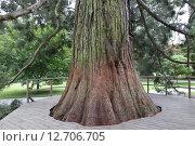 Купить «mammon tree», фото № 12706705, снято 7 декабря 2019 г. (c) PantherMedia / Фотобанк Лори